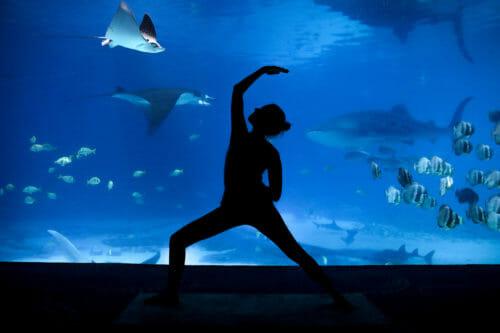Yoga By The Water At The Georgia Aquarium Concierge Services Of Atlanta
